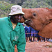 David Sheldrick Elephant Orphanage in Nairobi - Whispering I love you and thank you for saving me.