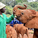 David Sheldrick Wildlife Trust - Keepers tender touch.