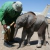 David Sheldrick Wildlife Trust Photo 2