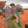 David Sheldrick Wildlife Trust Photo 3