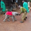 David Sheldrick Wildlife Trust Photo 5